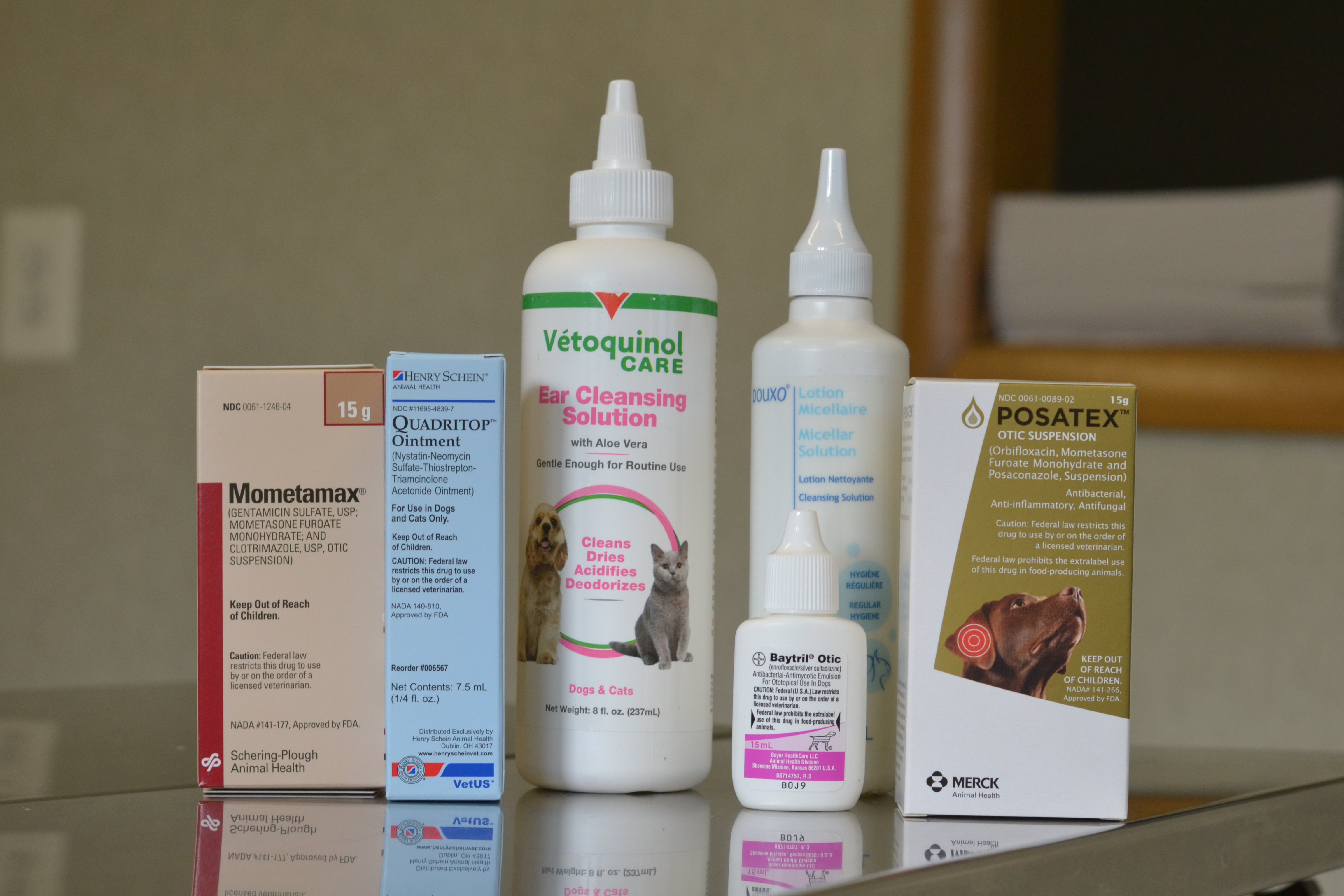 Evesham Veterinary Clinicear Infections In Dogs Evesham Veterinary